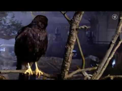 Wissen vor acht  Warum fallen schlafende Vögel nicht vom Ast?