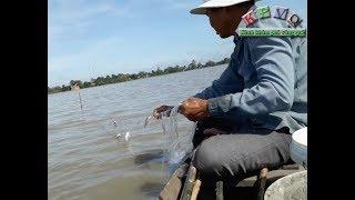 Trộn mồi nhử, giăng lưới bắt cá ở miền tây - Khám phá vùng quê