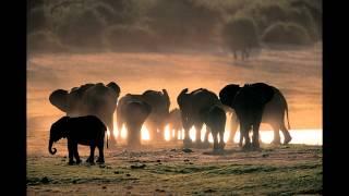 Ten Walls vs. James Holden - Nothing With Elephants (AlgisB mashup)