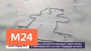 Смотреть видео Канадцы пытаются разгадать тайну пупка у нарисованного на снегу медведя - Москва 24 онлайн