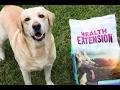 SAWYER THE LABRADOR TASTE TESTING HEALTH EXTENSION DOG FOOD