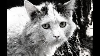 Нечеловеческая жестокость. В Харькове неизвестные убили котов в мини-приюте для животных