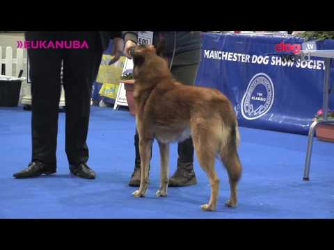 Manchester Dog show 2017 - Pastoral group FULL