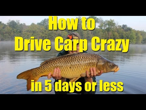 How To Drive Carp Crazy In 5 Days Or Less: Chum Effectively For Catching Carp