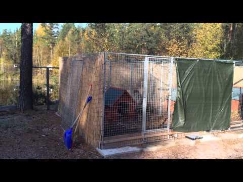 Caucasian ovcharka VS 2m high fence