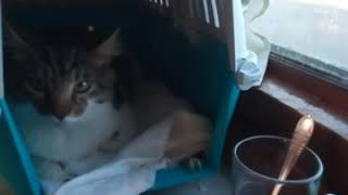 Как кошка ведет себя в поезде.  Кот в поезде. Как перевозить кота 🐱