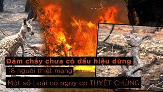 Cháy rừng ở ÚC vẫn chưa có dấu hiệu giảm, một số loài có nguy cơ TUYỆT CHỦNG