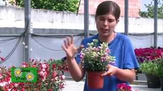 Plantas de sol y plantas de sombra