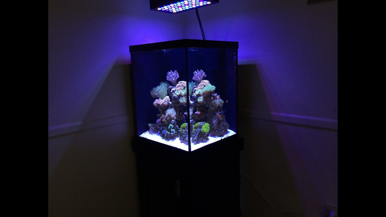 How To Start A Reef Tank Marineland 37 Gallon Cube Reef