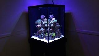Marineland 37 Gallon Cube: Reef Build