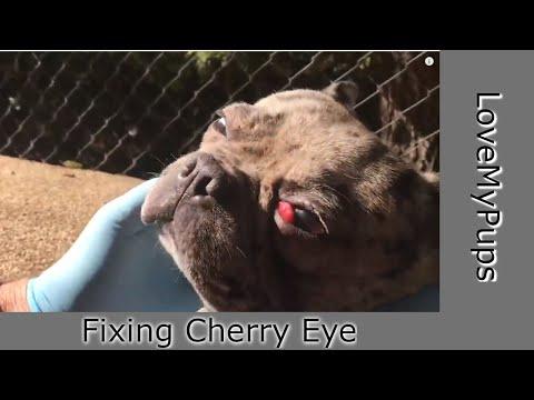 How To Fix Dog's Cherry Eye