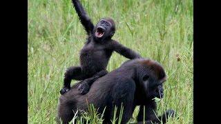 Как обезьяна с гранатой