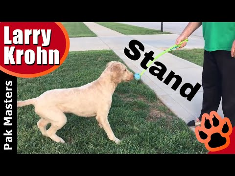 Easy way to teach any dog the STAND position