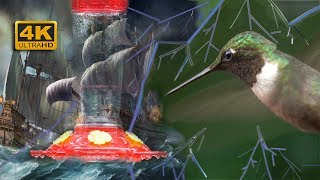 HUMMINGBIRD Flying in the RAIN - with Slow Motion 4K