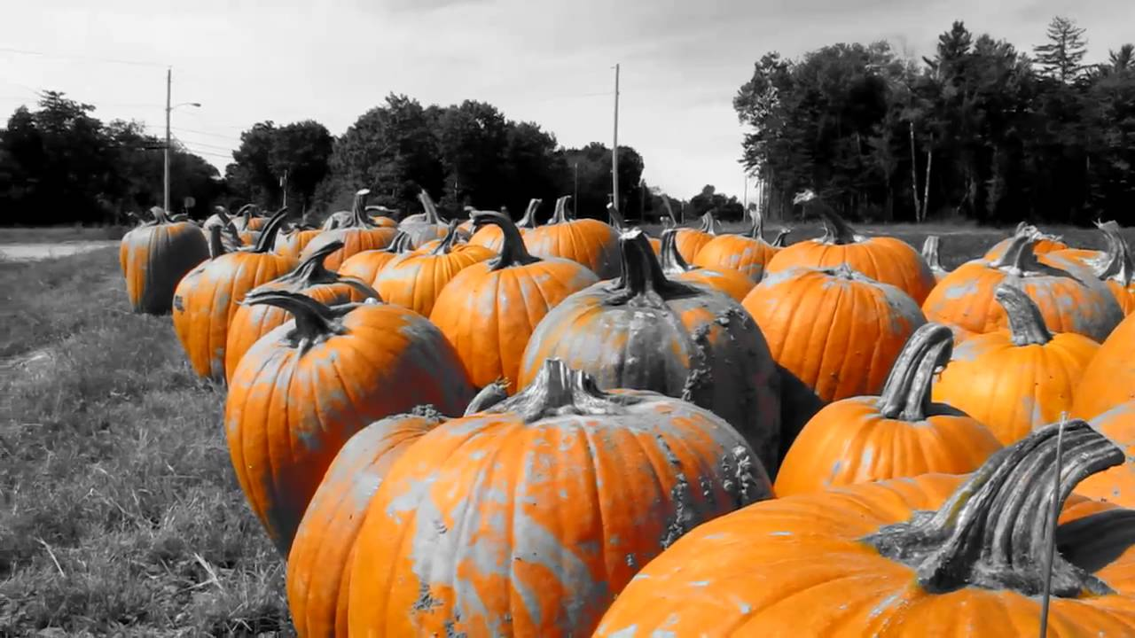 Canon PowerShot G12 Color Accent Pumpkins