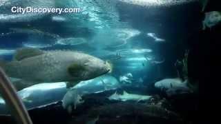 Sentosa Island Singapore Morning Tour with Cable Car Ride and S.E.A. Aquarium Option