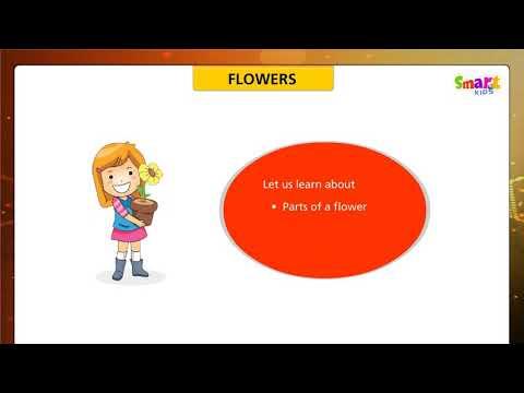 G 4 Flowers