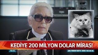 Milyoner kedi! - Atv Haber 22 Şubat 2019