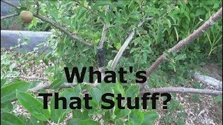 Electrical Tape For Grafts and Wounds on Trees