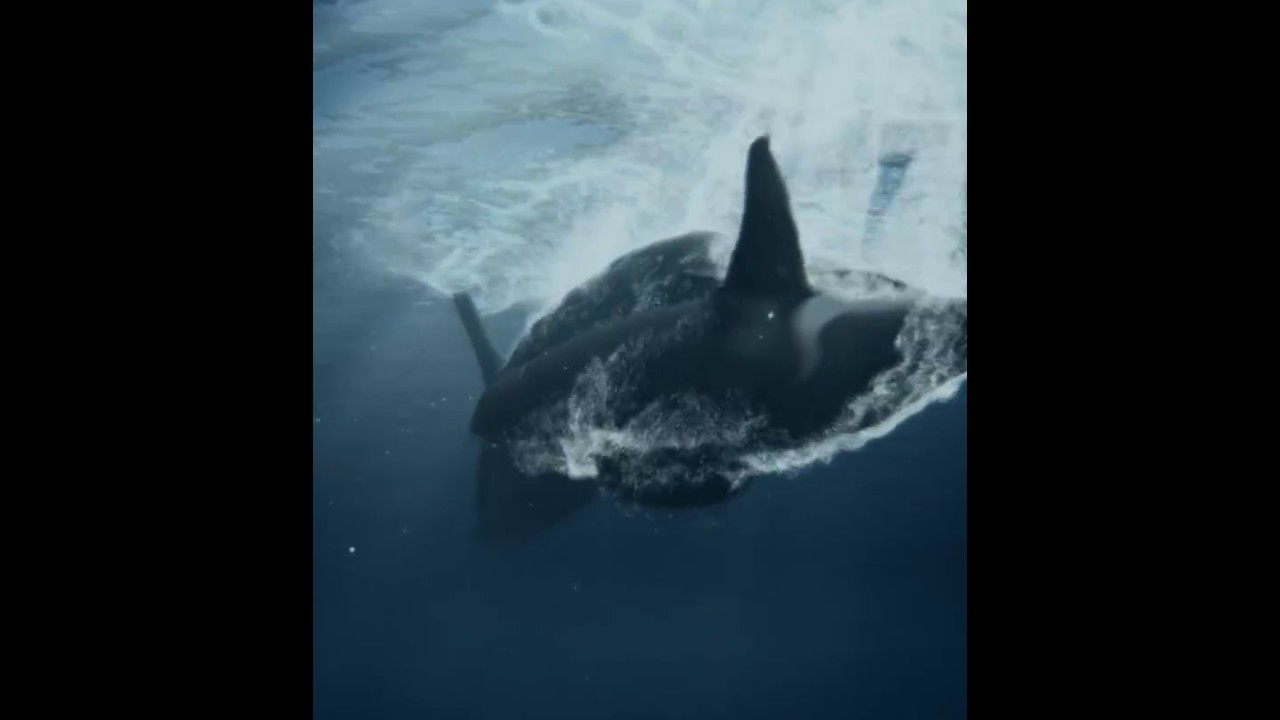GreyWhales Killer Whales Attack Film 3d Water Simulation