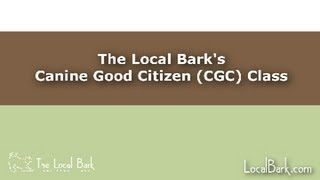 The Local Bark's Canine Good Citizen (cgc) Class