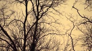 Dip [Soul Quality Quartet album] (tracks 1 and 2)