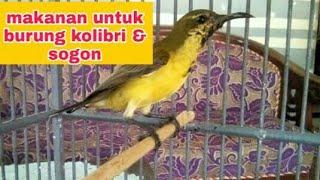 Download Mp3 Makanan Untuk Burung Kolibri & Sogon