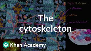 The cytoskeleton | Structure of a cell | Biology | Khan Academy