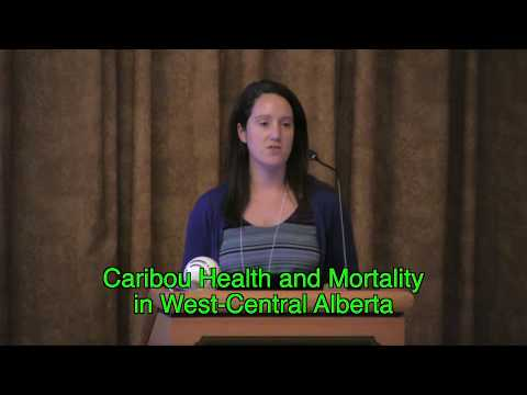 Caribou Health & Mortality in West-Central Alberta (Laura Finnegan)