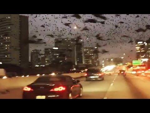 بعد حرق المسجد ، فجأة الآلاف من الطيور السوداء غزت مدينة تكساس في مشهد مخيف