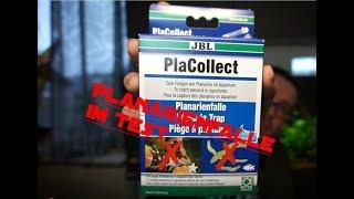 PLANARIENFALLE / JBL PlaCollect TEST