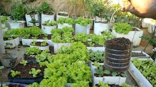 Adubo Capaz De Produzir Qualquer Hortaliça