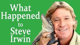 What happened to STEVE IRWIN?