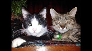 Наши итальянские коты. Когда у котиков сиеста)))