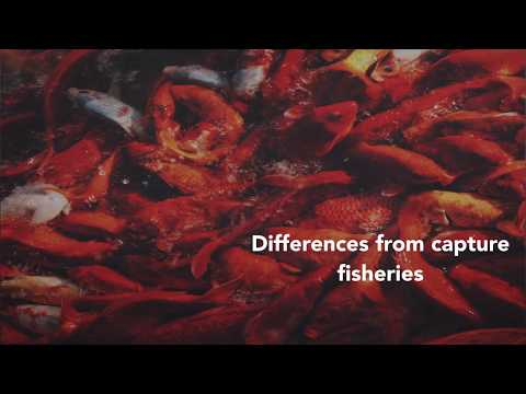 Differences between capture fisheries and aquaculture