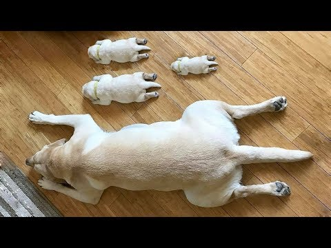 Cute is Not Enough - Funny Cats and Dogs Compilation #78