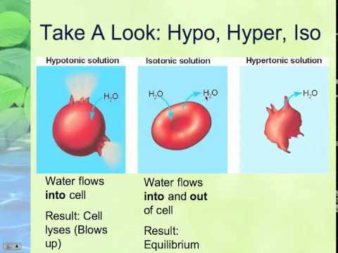 LECTURE 1-3-3: Osmosis and Diffusion