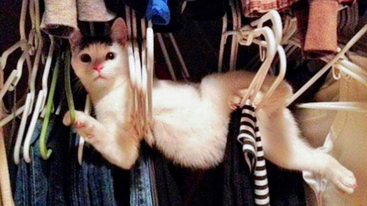 Самые забавные и смешные кошки и собаки - СМЕШНЫЕ ЖИВОТНЫЕ ...