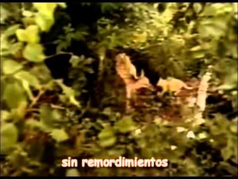 Las aventuras de Chatrán   en español