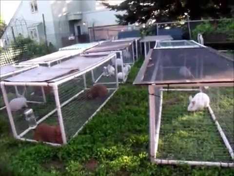 Pvc rabbit tractors youtube for Pvc rabbit cage