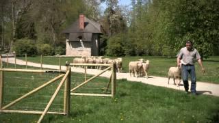 De l'écopastoralisme au parc du château de Rambouillet
