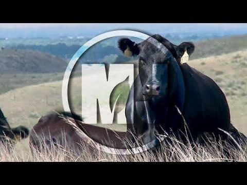 Pasture & Range Condition - Jerry Volesky - August 11, 2017