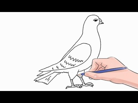 how to draw a dove easy step by step