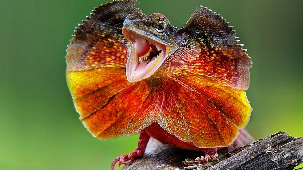 unique animals australia found