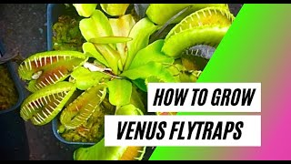 How to Grow a Venus Flytrap (Basic Care Guide)