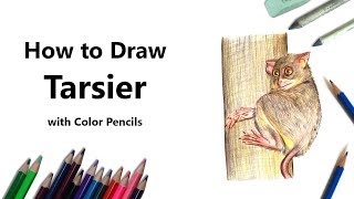 How to Draw a Tarsier with Color Pencils [Time Lapse]
