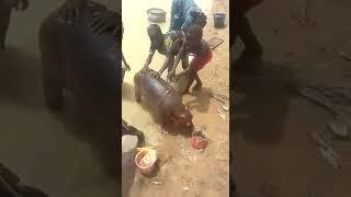 une sorte de bétail au niger
