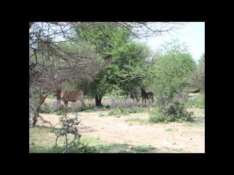 Life in Botswana