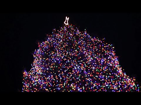 Boise Capital Tree Lighting  sc 1 st  YouTube & Boise Capital Tree Lighting - YouTube