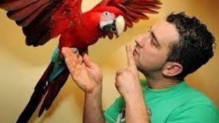 Cara Melatih Burung Kakaktua Supaya Cepat Pandai Berbicara